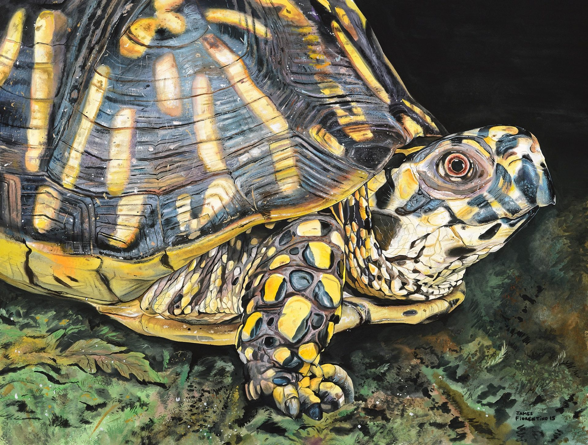 short essay on turtle A decline of turtles as we know them sea turtles are large air-breathing reptiles that spend the majority of their long lives in the open ocean waters.