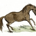 horse-images-21