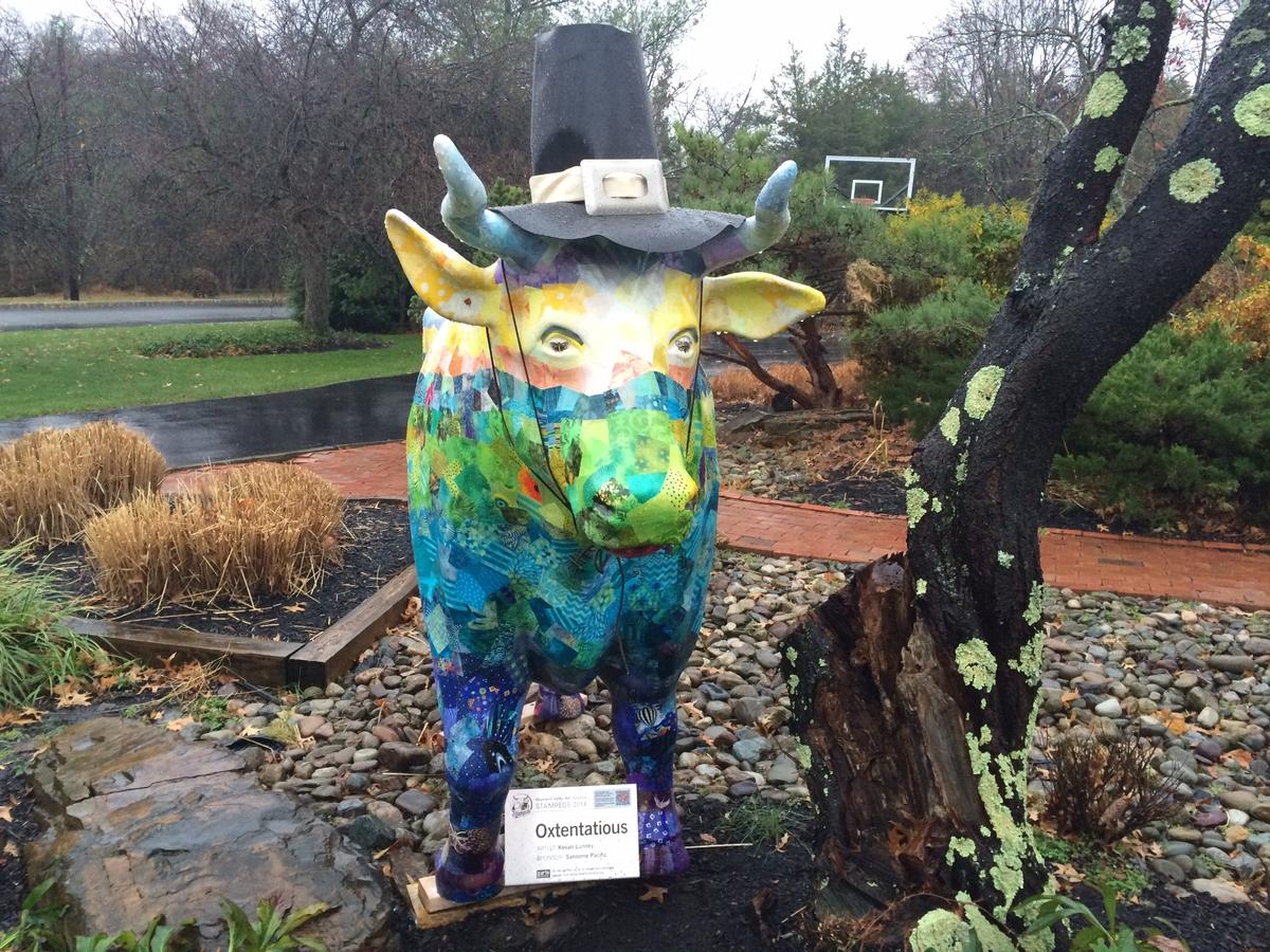 Random Ox of Kindness in Elm Ridge