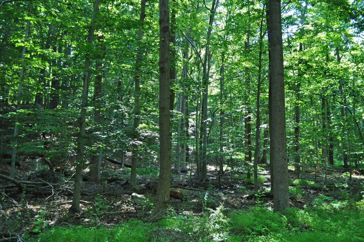 From corporate campus to park: Partnership saves 320 acres in rural Hopewell Township