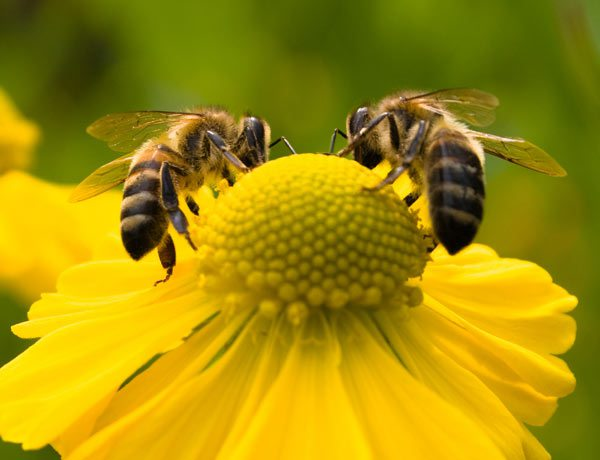 """Attracting Pollinators Will Be Focus of Spring """"Your Wild Yard"""" Series"""