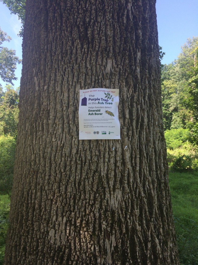 Mercer County Park Commission Seeking Volunteers to Survey Ash Trees