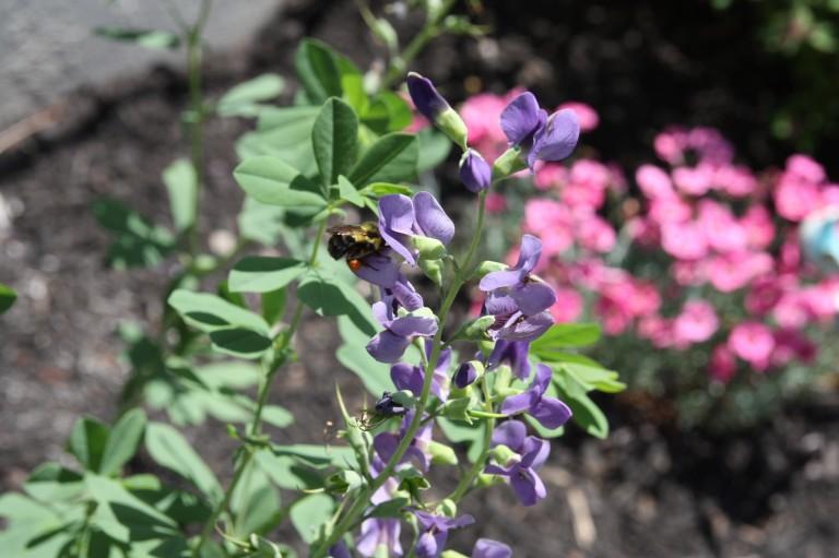 D&R Greenway Announces Spring 2016 Native Plant Sale