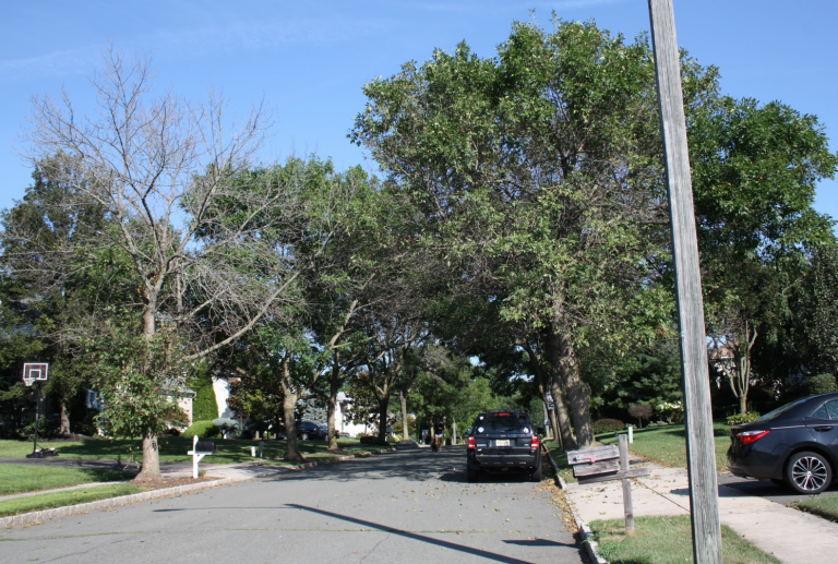 Lawrence Township Hopes to Stop the Emerald Ash Borer Beetle