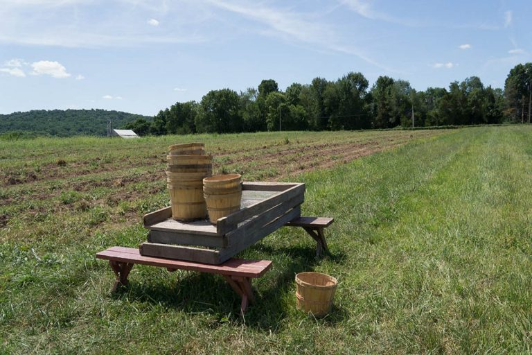 Howell Farm to Harvest Potatoes for Greater Mercer Food Cooperative
