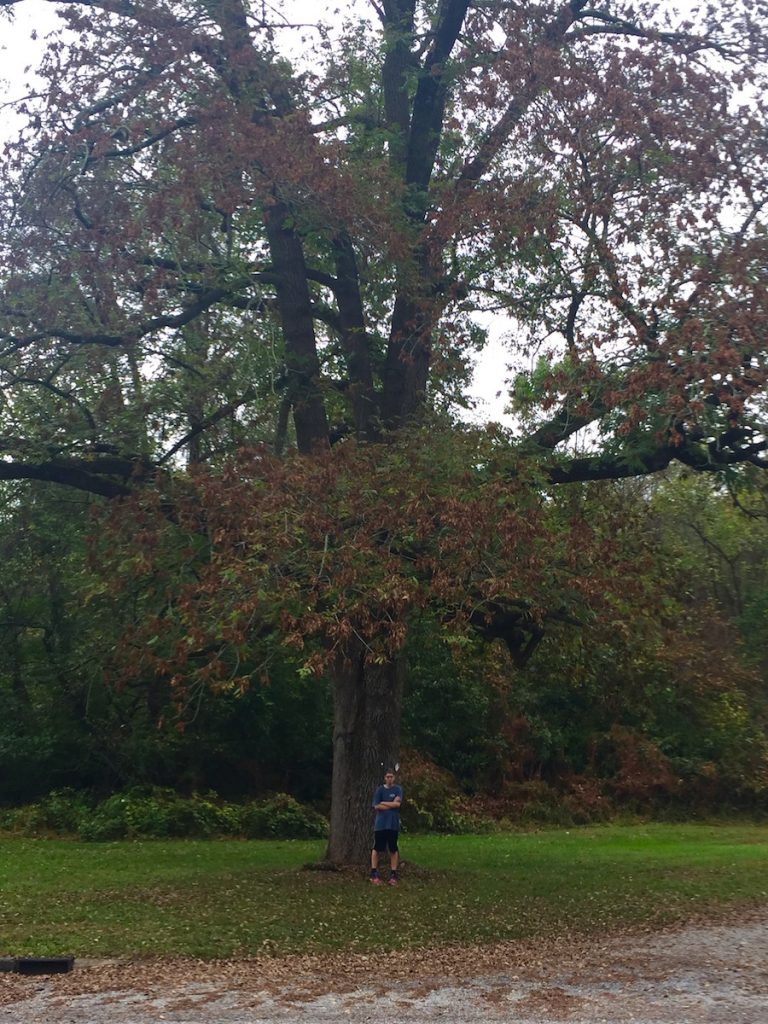 Hopewell Valley's Ash Trees Pose Serious Safety Hazard