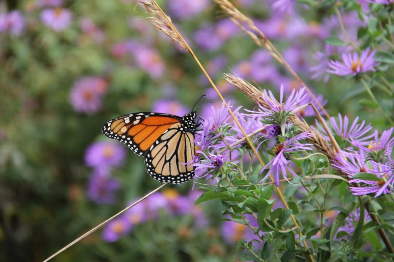 First Sunday Films on Native Plants at Watershed Institute
