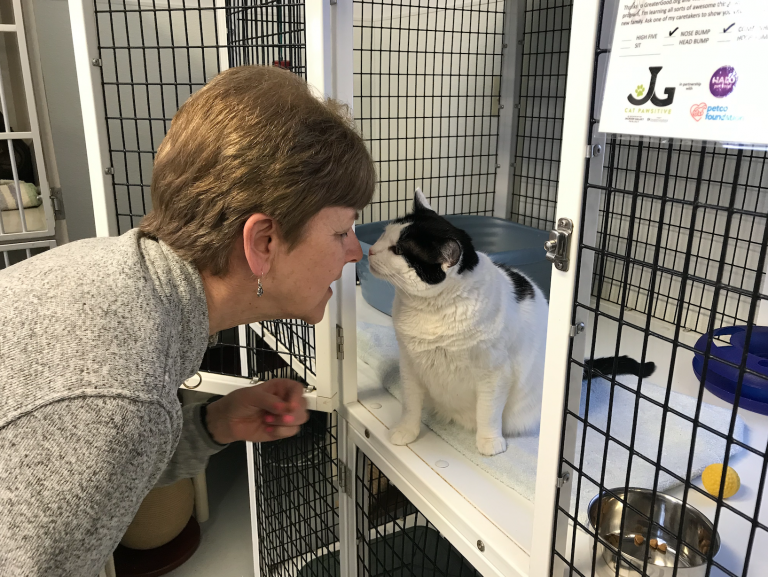 EASEL Selected for Innovative Training Program to Increase Cat Adoptions