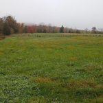 Cifelli farm fields 5