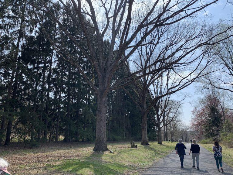 Seniors observe National Walking Day