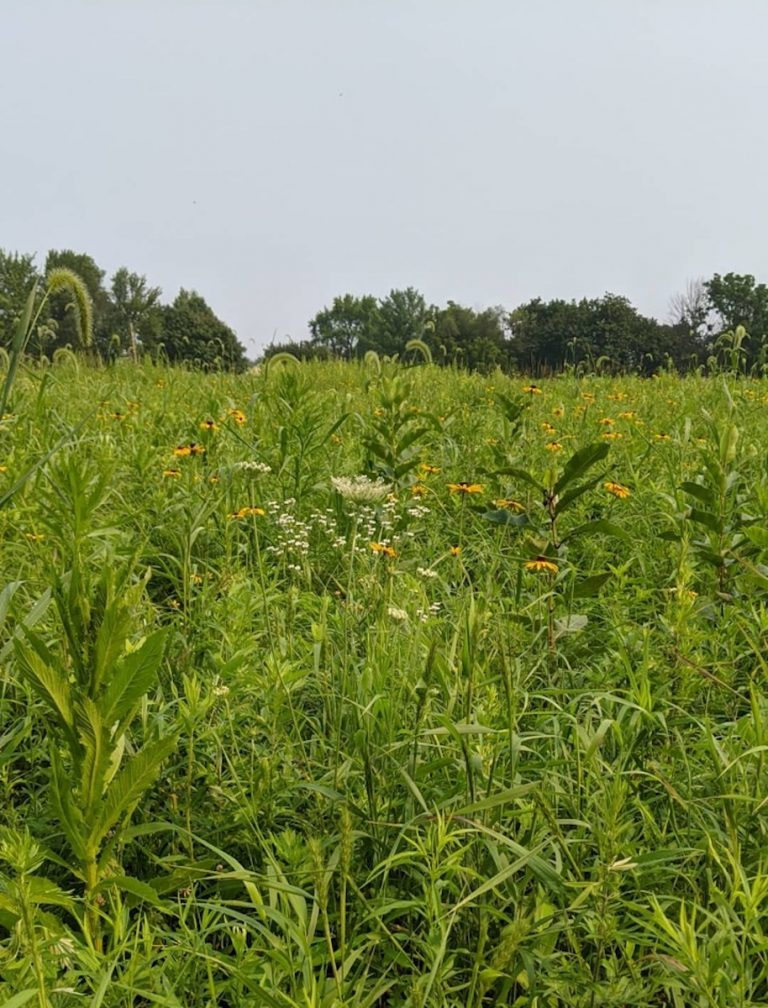 Meadow mowing in Hopewell Borough